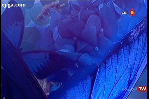 اجرای موزیک بیقرارم در برنامه بهار جان محسن ابراهیم زاده آقای خاطره ساز موسیقی صدای نو ما با همیم عش
