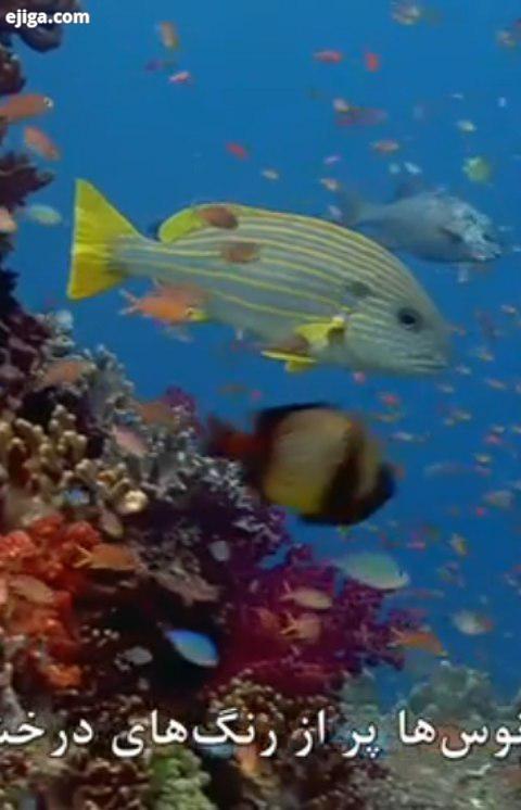 .این کلیپ رو تا آخر ببینید از دیدین هنر این ماهی به وجد بیاین حیوانات حیوانات وحشی حیات وحش حیوانا