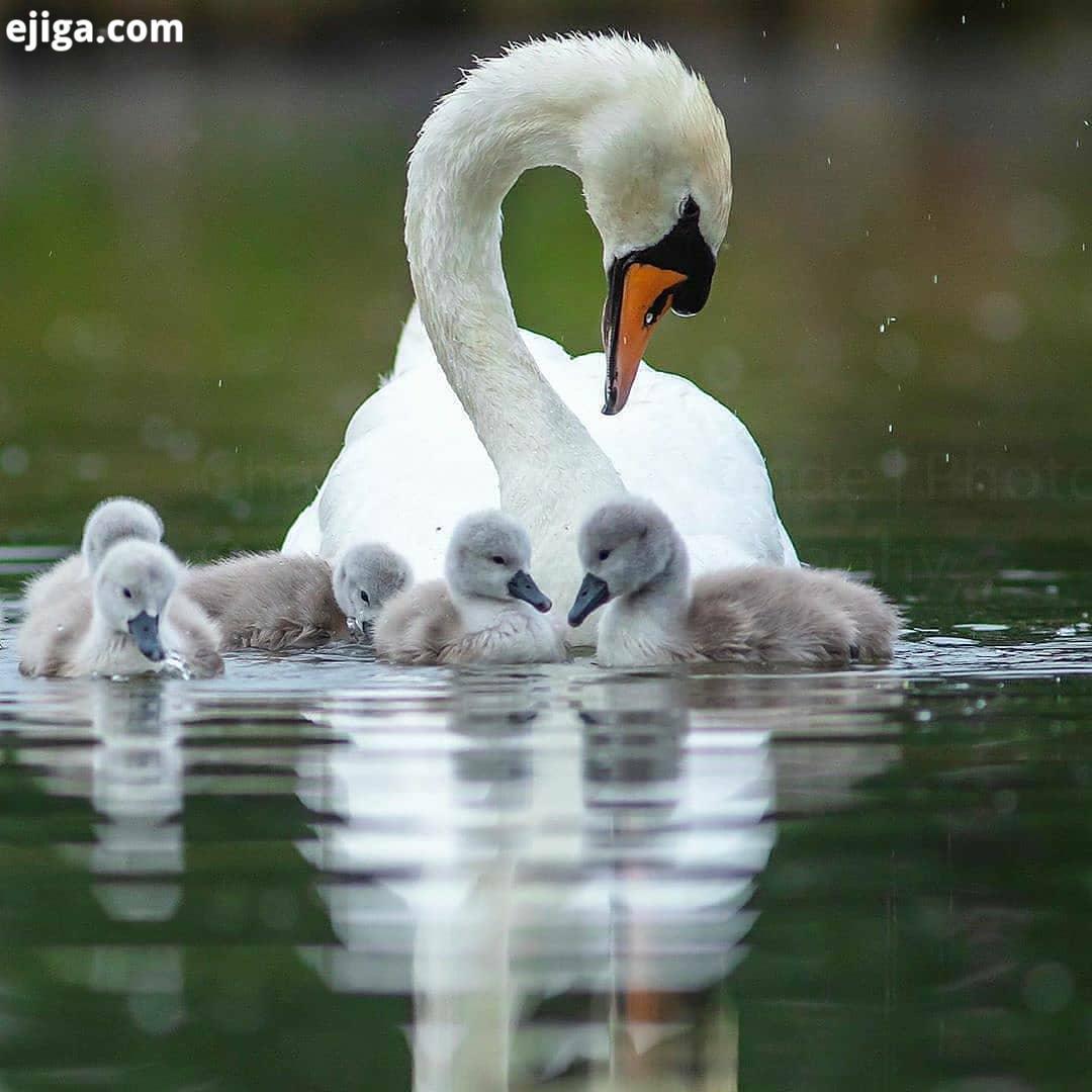 .نظرتون چیه بچه ها.حیوانات حیوانات وحشی حیات وحش حیوانات زیبا طبیعت طبیعت بکر طبیعتگردی طبیعت زیبا