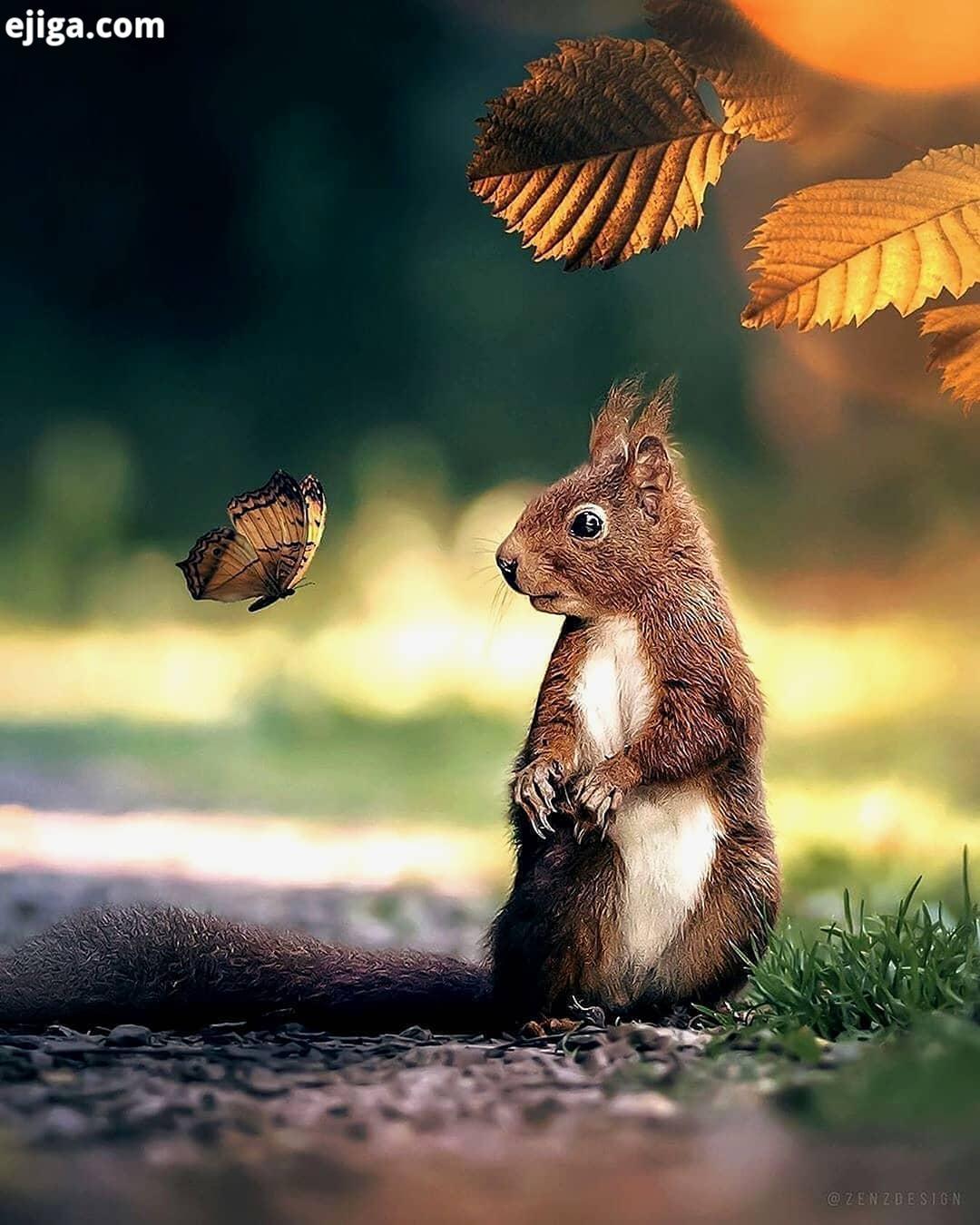 .شکار لحظه ها حیوانات حیوانات وحشی حیات وحش حیوانات زیبا طبیعت طبیعت بکر جنگل حشرات طبیعتگردی موش شک