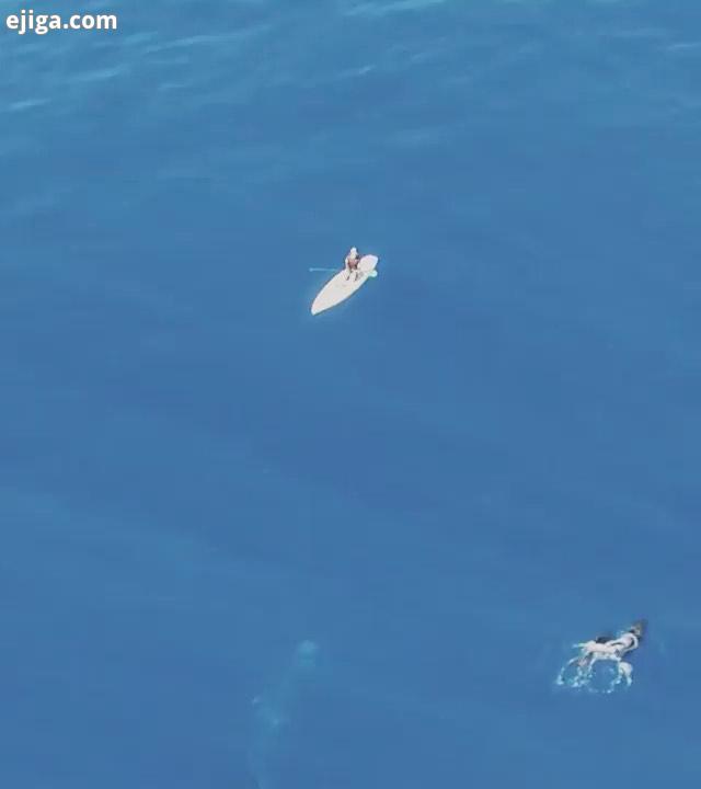 شگفتیهای آفرینش...نهنگ آبی نهنگ وال فان فانتزی اقیانوس اقیانوسها دنیای حیوانات حیوانات حیوانات را دو